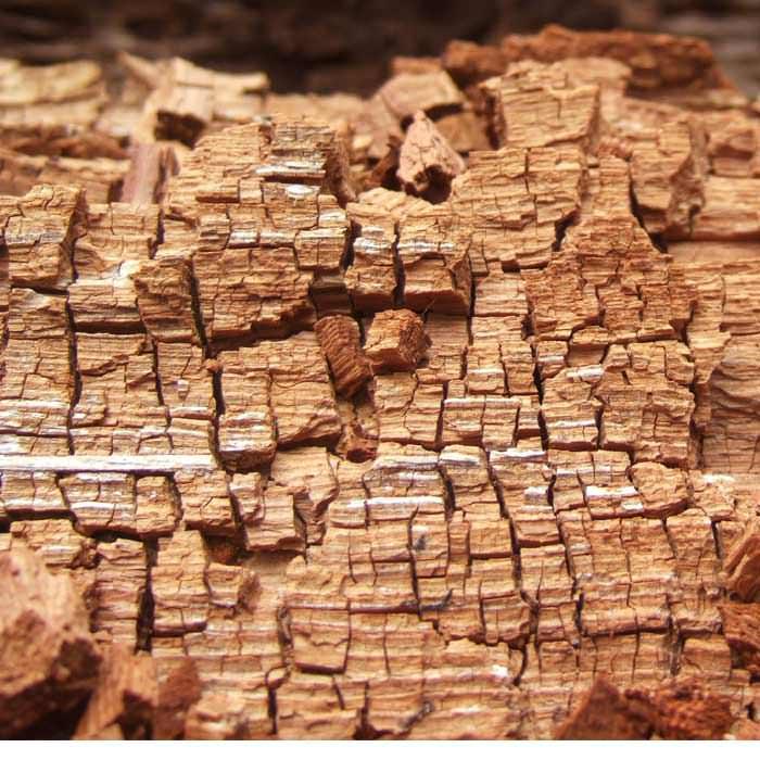 Dry Rot Damage Prevention In Portland Eugene Salem