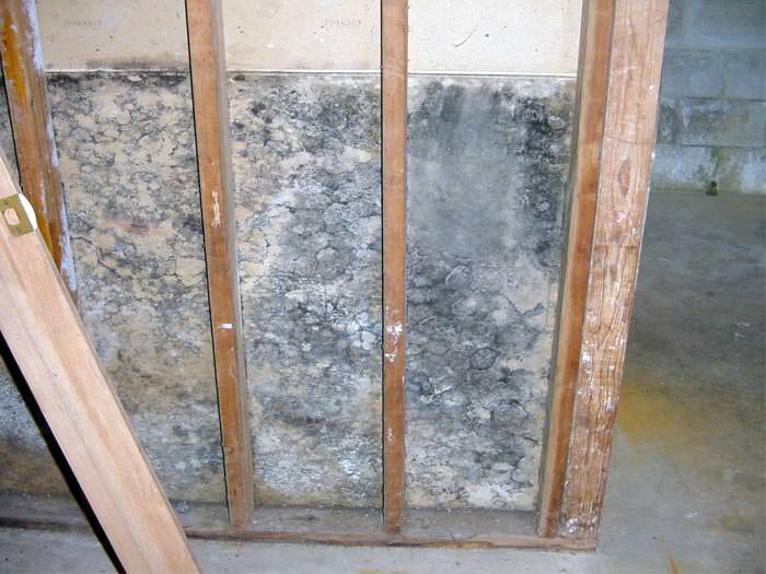 A Mold Damaged Wall Section In Wet Bat