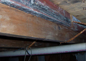 Rotting, decaying wood from mold damage in Canby